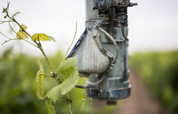 vigne arrosage 2 - Domaine Luneau Papin