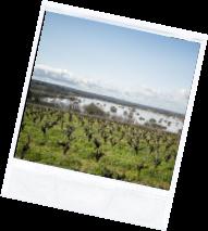 vin illus2 1 - Domaine Luneau Papin