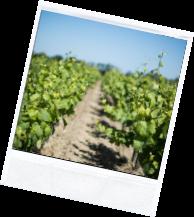 vin illus2 3 - Domaine Luneau Papin