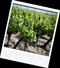 vin illus2 4 - Domaine Luneau Papin