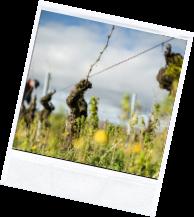 vin illus2 5 - Domaine Luneau Papin