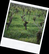 vin illus2 6 - Domaine Luneau Papin