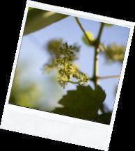 vin illus2 7 - Domaine Luneau Papin