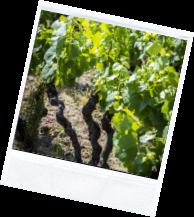 vin illus2 8 - Domaine Luneau Papin