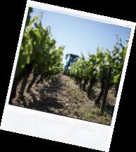 vin illus2 - Domaine Luneau Papin