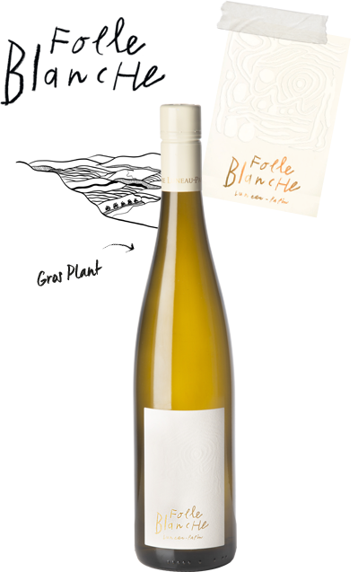 cuvee folle blanche - Domaine Luneau Papin