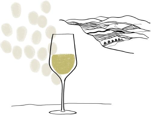 dessin vin - Domaine Luneau Papin